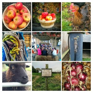 IMG_20151126_121511-2-COLLAGE
